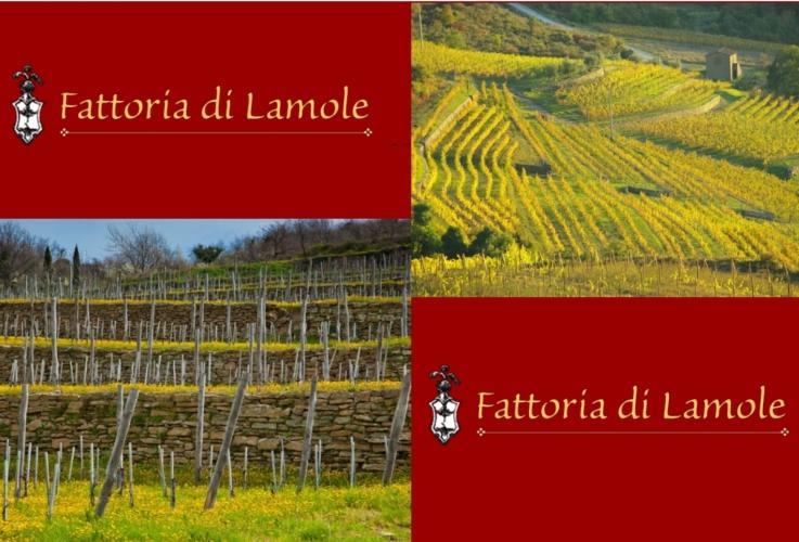 Toscana una medaglia al paesaggio per le terrazze di for Planimetrie tradizionali della fattoria
