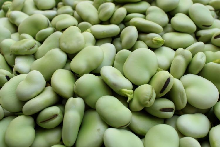 fava-leguminosa-orticola-pianta-seme-byvalevale-adobestock157090373-750x500
