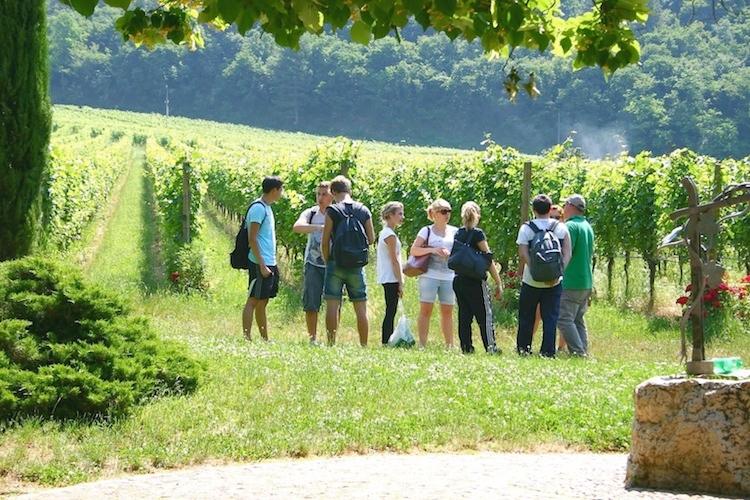 fem-viticoltura-enologia-studenti-in-campo