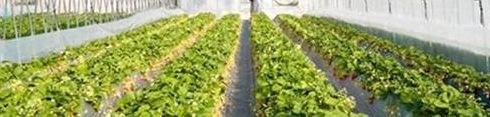 fieragricola-2014-colture-protette-serra