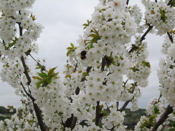fiori-fioritura-fonte-green-has-italia.jpg