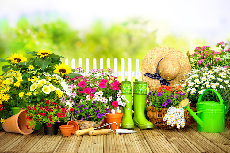 fiori-giardinaggio-hobbistica-by-alexander-raths-fotolia-750