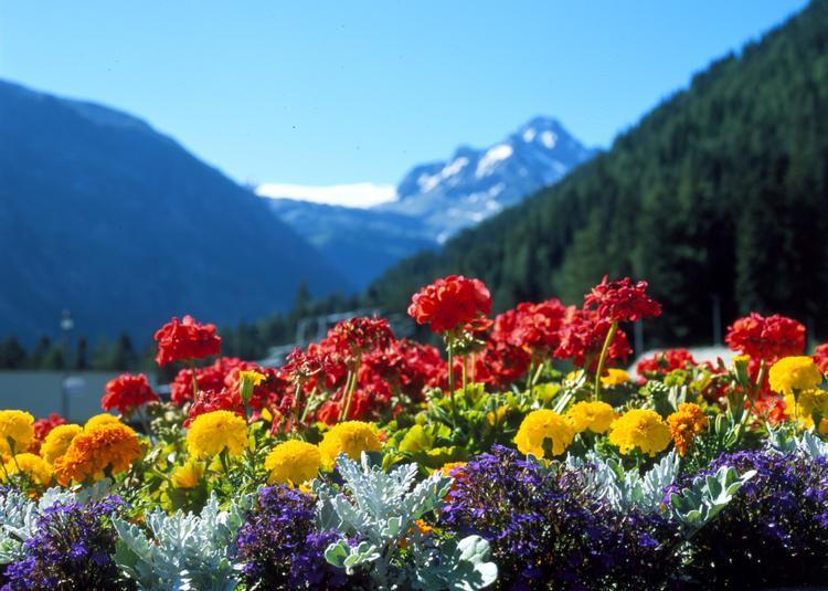 fiori-montagne-primavera