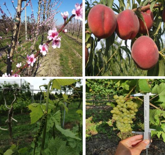 Veg-Aid: fiori e frutti così non vengono da soli - le news di Fertilgest sui fertilizzanti