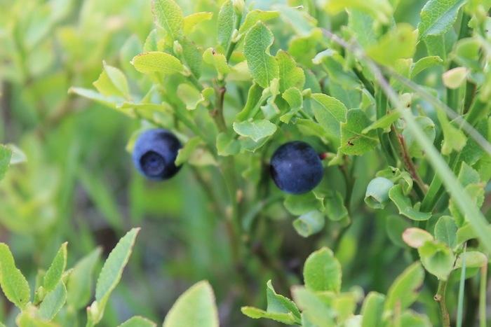 fippo-piante-officinali.jpg