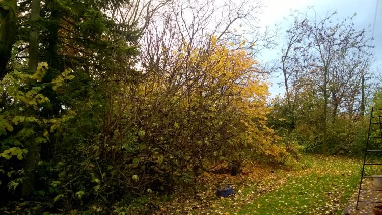 foglie-1-fonte-alfonso-paltrinieri-rubrica-pubblici-giardini-20201028.jpg