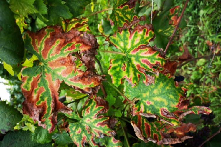foglietigrate-esca-luca-nerva