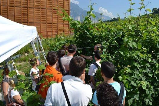 fondazione-edmund-mach-corso-viticoltura-summer-school