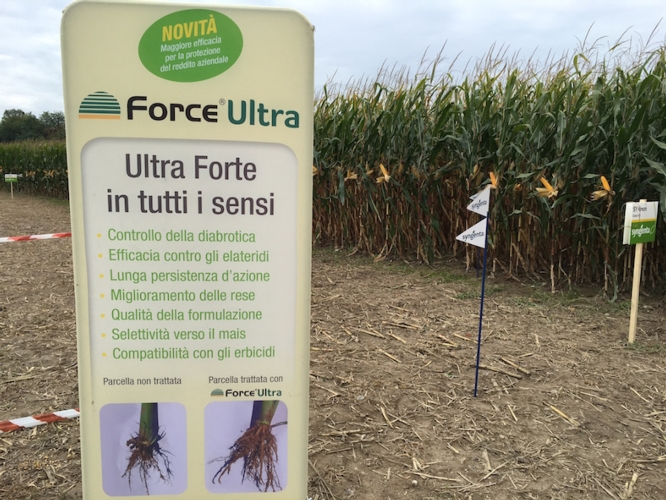 force-ultra-syngenta-cinquemani
