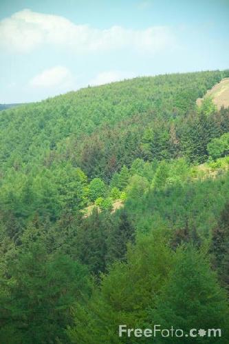 foreste-alberi-freefoto