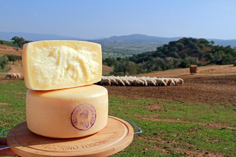 formaggio-pecorino-toscano-fonte-consorzio-del-pecorino-toscano-dop