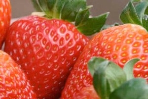 fragole-fonte-italiafruit.jpg