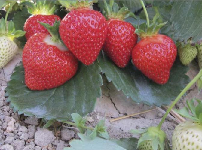 Le eccellenze made in Geoplant volano a Varsavia - Plantgest news sulle varietà di piante
