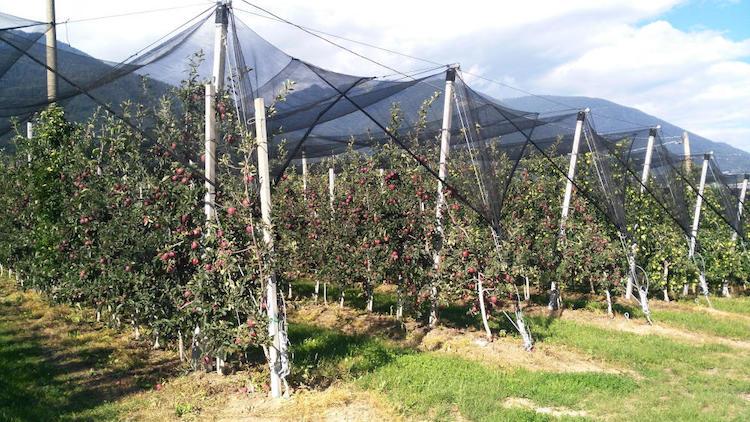 fructus-apple-reti-fonte-arrigoni
