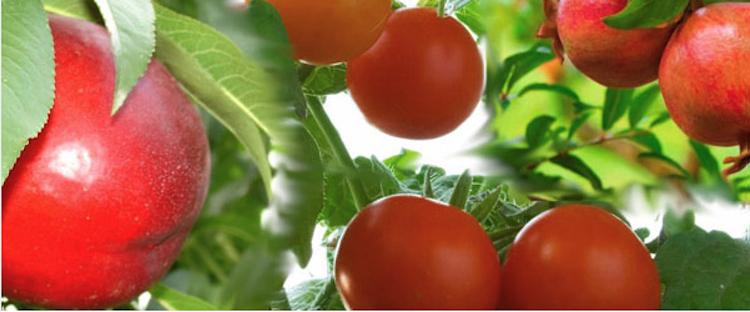 Dal sole, solo benefici con SunStop Lg e CropAid AntiHeat - le news di Fertilgest sui fertilizzanti