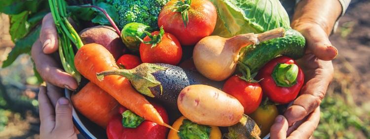 frutta-verdura-agroalimentare-by-yanadjan-adobe-stock-750x282