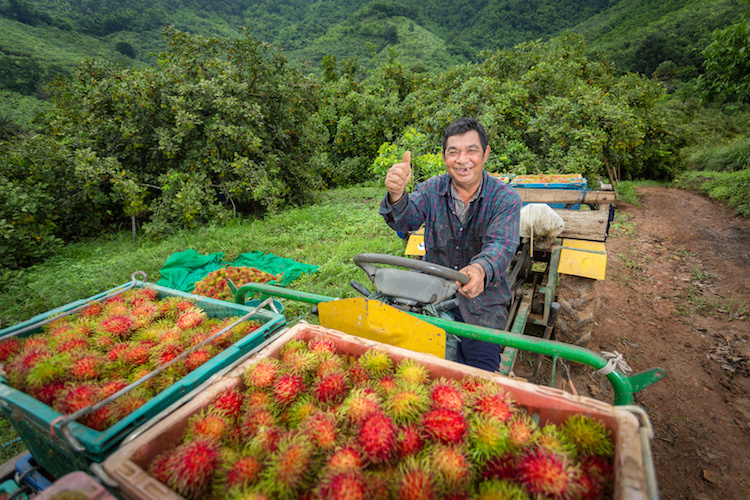 frutti-asiatici-ogm-cina-by-tong2530-fotolia-750.jpeg