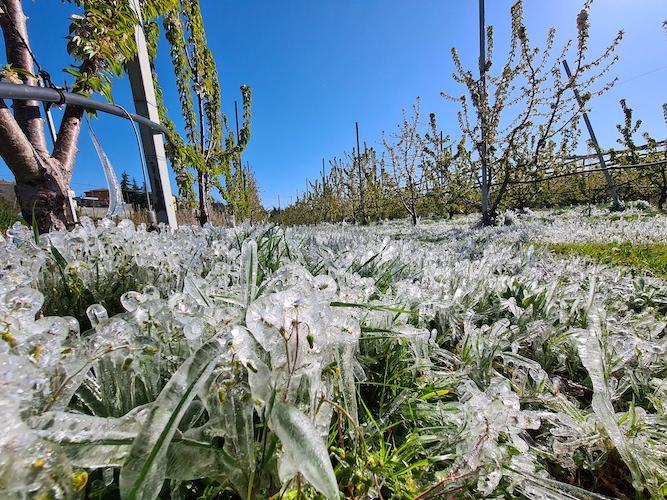 gelate-emilia-romagna-aprile-2021-fonte-cia