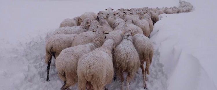 gelo-allevamento-emergenza-sud-italia-gen17-fonte-cia