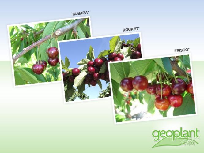 geoplant1