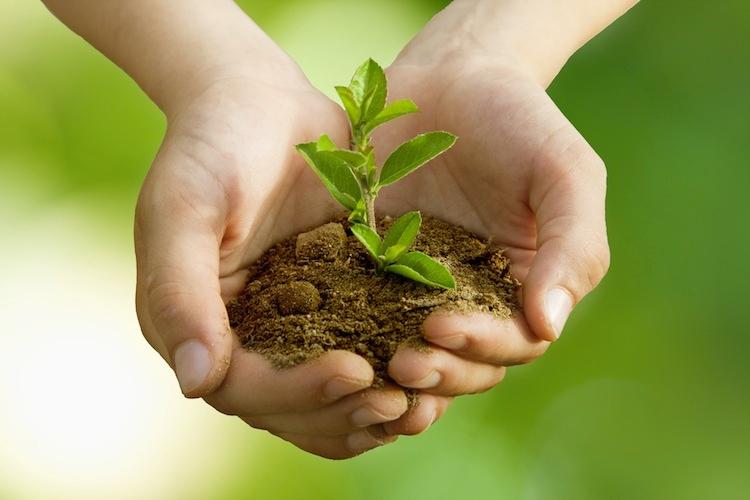 germoglio-pianta-mano-ambiente-natura-ecologia-by-carballo-fotolia-750x500.jpeg