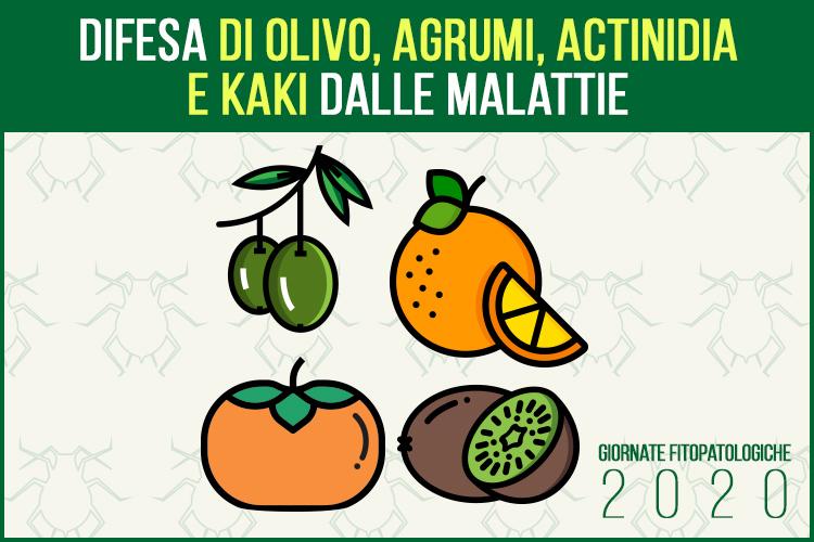 gf2020-giornate-fitopatologiche-olivo-agrumi-actinidia-kaki-fonte-agronotizie