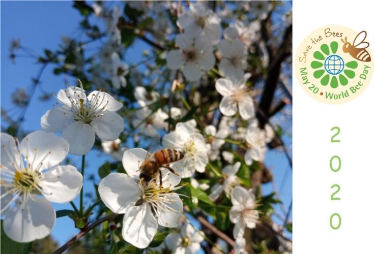 giornata-mondiale-api-2020-by-matteo-giusti-agronotizie-jpg