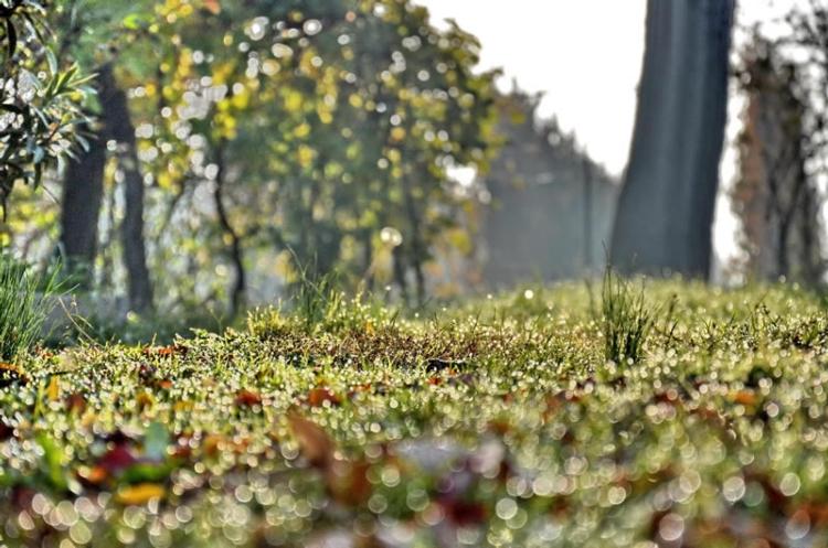 gocce-pioggia-rugiada-prato-erba-foglie-autunno-vite.jpg