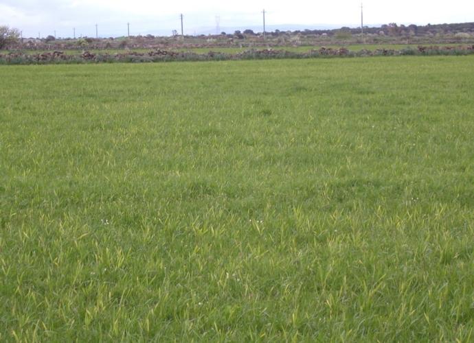 granammon-loietto-ks-agricoltura