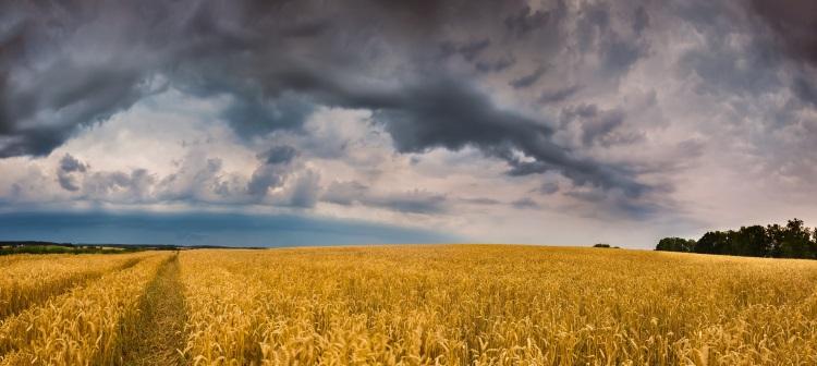 grano-frumento-nuvole-temporale-maltempo-by-miloszg-adobe-stock-750x336