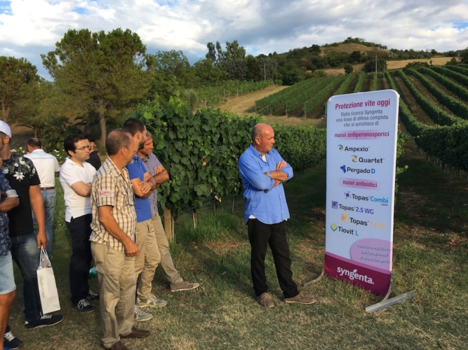 grape-field-tour-2017-syngenta