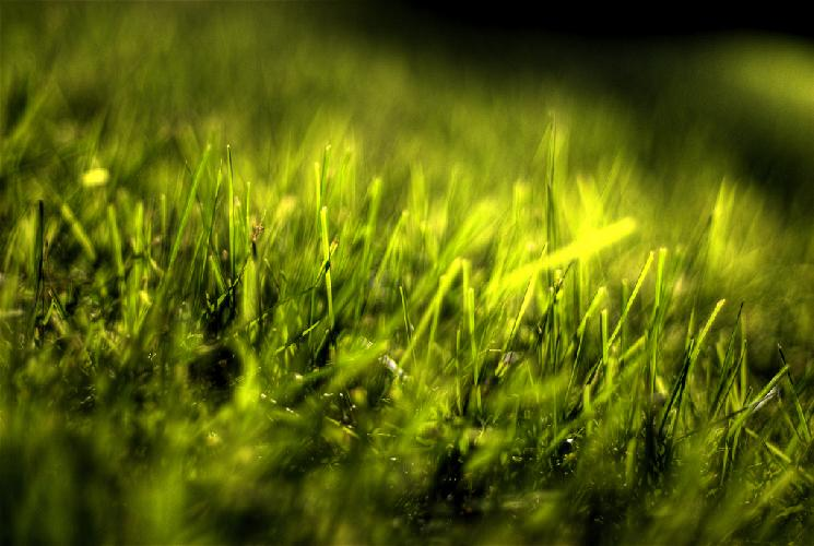 green-grass-erba