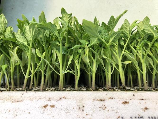 Trapianti, dal vivaio al pieno campo - le news di Fertilgest sui fertilizzanti