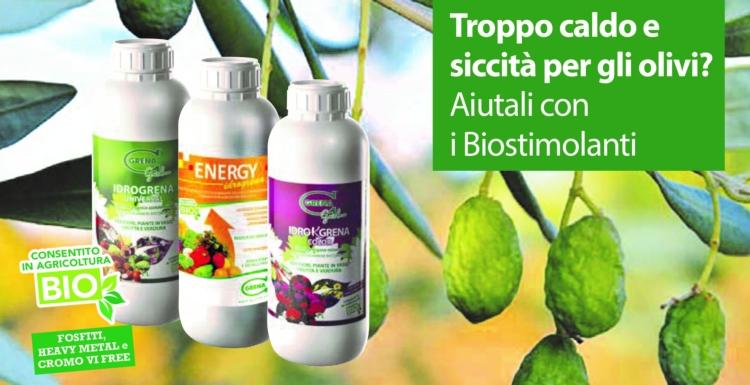 grena-olivo-siccita-2021
