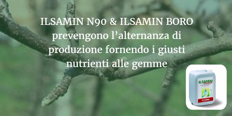 ilsamin-n90-ilsamin-boro-alternanza-nutrizione-gemme-fonte-ilsa