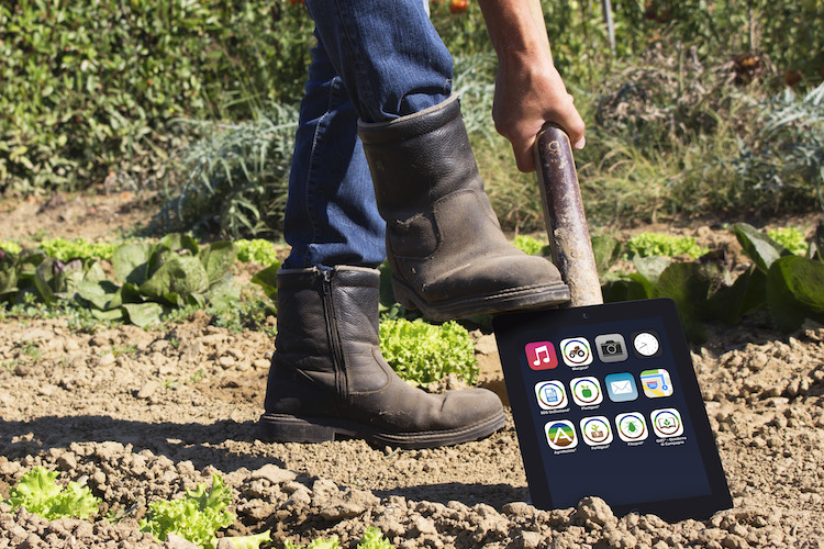 image-line-ivano-zappa-digitale-agricoltura