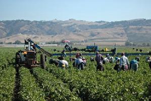 immigrati_lavoro_stagionale_agricoltura2