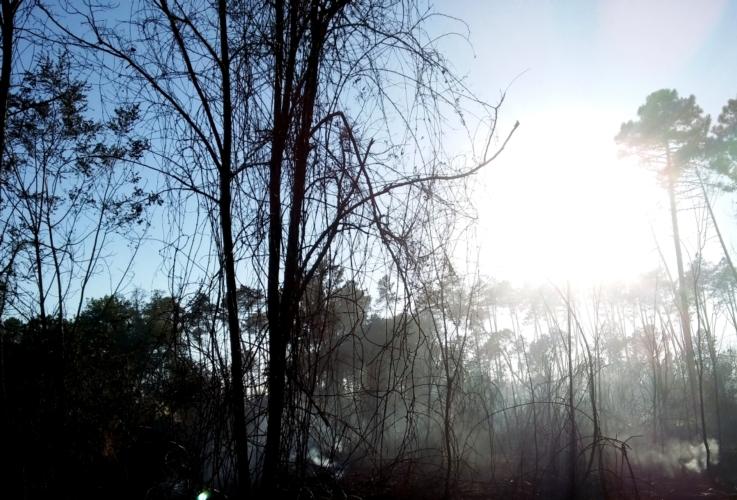 incendi-boschivi-fuoco-by-matteo-giusti-agronotizie-jpg