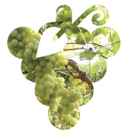 innovazione-sostenibilita-viticoltura-tavola-20170203