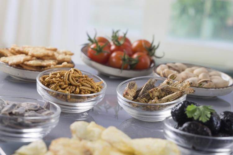 insetti-in-tavola-jpc-prod-fotolia-750