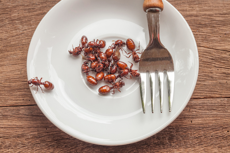 insetti-piatto-by-amnarj2006-fotolia-750.jpeg