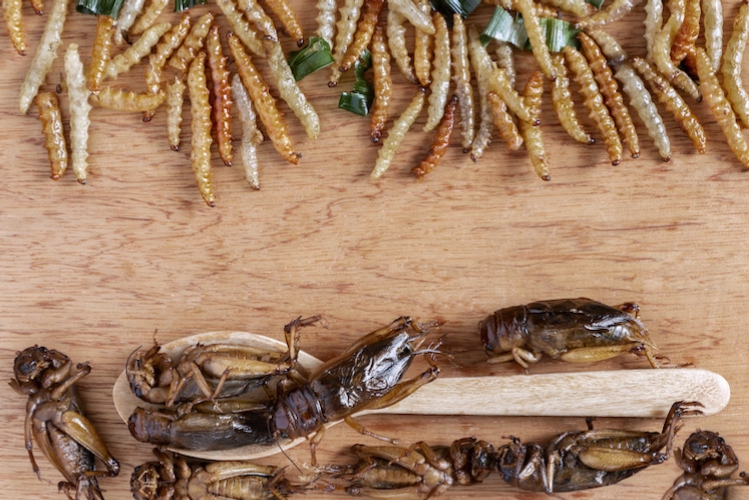 insetti-proteine-novel-food-by-pongsak-adobe-stock-748x500