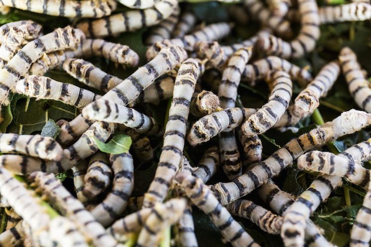 insetti-vermi-lombrichi-by-yutthana-fotolia-750.jpeg