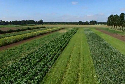 intercropping-wageningen-2