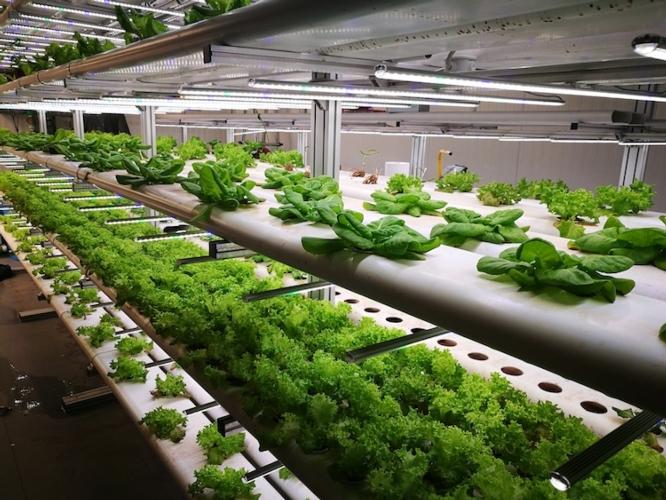 interno-serra-della-startup-gh-zero-installata-nell-istituto-agrario-bonfantini-di-novara-fonte-gh-zero