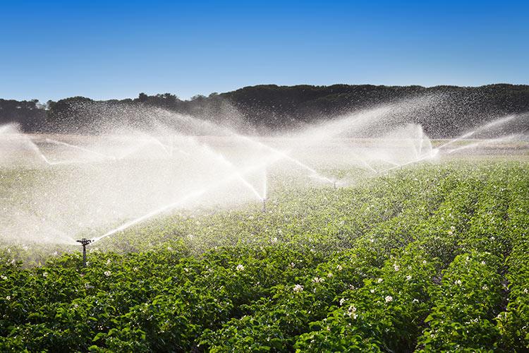 irrigazione-acqua-campo-patate-fonte-demachi-istock-750.jpg