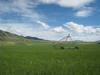 irrigazione-campo-flickr-cc20-byopencontent.jpg