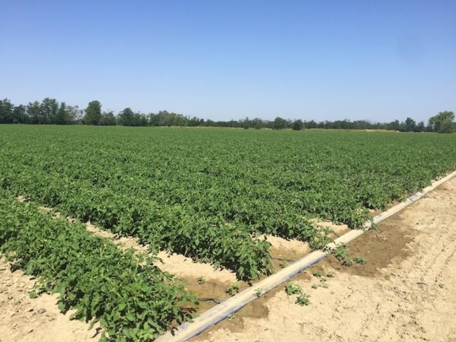 irrigazione-fonte-icljpg