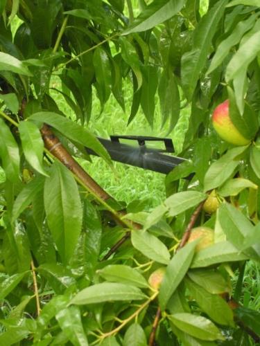 irrigazione-pianta-fonte-anbi