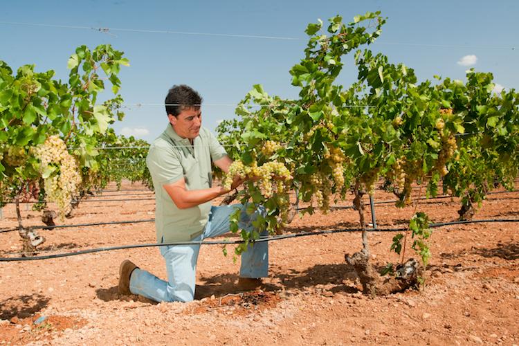 Soluzioni innovative a goccia per un grande vino, ogni anno